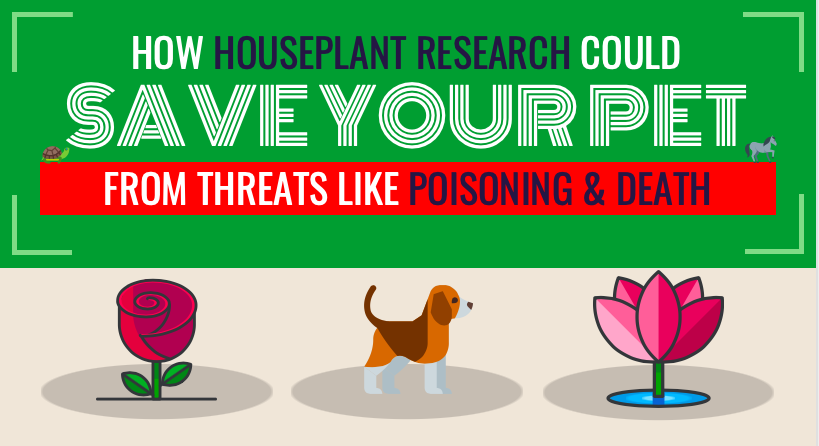 How Houseplant Research Could Save Your Pet