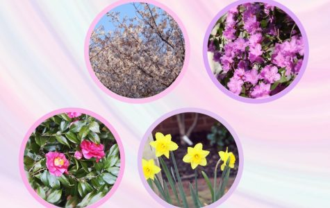 The Flora and Fauna of Holy Cross