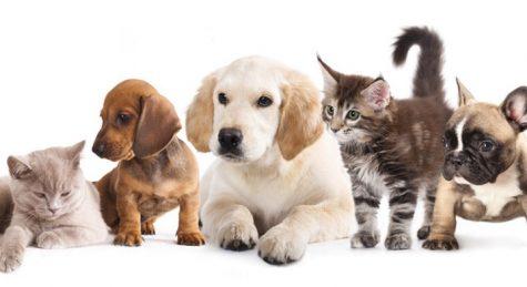 Pets at AHC